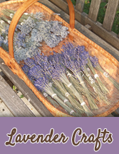 Lavender to make your own lavender crafts!