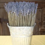 Dried Hidcote Lavender Bud Hedge Home Decoration