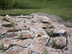 Pea_Gravel_ newspaper_mulch