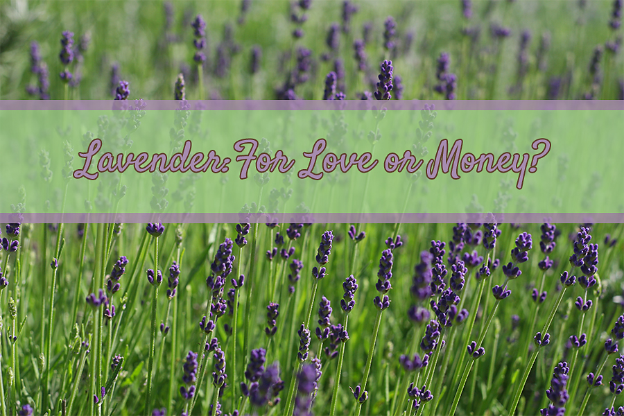 LavenderGreen-Love_or_money